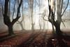 Ligths of Winter (Hector Prada) Tags: bosque niebla bruma naturaleza árbol hojas atmósfera mágico hayedo forest mist fog gold nature tree leaves mood magic light luz backlight sombras shadows sun paísvasco basquecountry