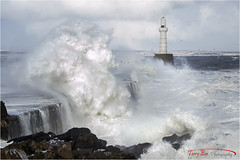 The Great Storm_9575 (The Terry Eve Archive) Tags: beastfromtheeast storm siberianwind gales gulls waves aberdeenharbour harbourwall