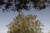 moods of keoladeo - i (nevil zaveri (thank U for 15M views:)) Tags: zaveri nature landscape tree trees rajasthan india images stockimages nevil nevilzaveri stock photo water lake reflection leaves birds sanctuary national park np wilderness blog keoladeo