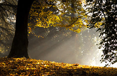 The first light of the morning (Ennio66) Tags: light autumn park parcodimonza foglie leaves sunset sun morning trees yellow