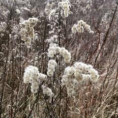 Winter walk. Where is snow? (basiamarcisz) Tags: zima winter wilanów warsaw warszawa pola grass trawy przyroda natura nature instagram