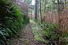 Trail shot (rozoneill) Tags: cape mountain berry creek siuslaw national forest hiking oregon florence princess tasha scurvy ridge trail nelson coastal