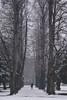 Un freddo dicembre - A cold December. (sinetempore) Tags: torino turin neve snow freddo cold inverno winter alberi trees corridoiodalberi corridoroftrees donna woman parcodellatesoriera parco park unfreddodicembre acolddecember