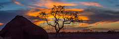 Sunset before the storm (d_joshua_brunner.) Tags: djoshuabrunner d7200 onslow western australia wa westernaustralia tree termite pilbara