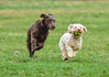 run for fun (Paul Wrights Reserved) Tags: dog dogs pet pets animals animal happy run running ball