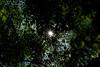 Summer dreams (Millie Cruz*) Tags: summer green leaves sky canopy trees sun rays warm shadow lookingup sunburst flare foliage
