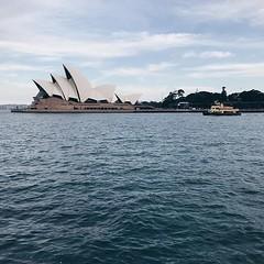 #evening #light on the #iconic @sydneyoperahouse @sydney @visitnsw @australia #ilovesydney #sydney #summer #newsouthwales #wanderlust #travel #australia #seeaustralia #sydneyfolk #australiagram #sydneytravel #travel #guardiantravelsnaps #guardiancities #l (travelformotion (more on www.travelformotion.com)) Tags: ifttt instagram