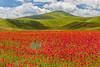 Non calpestare (Marte Visani) Tags: lenticchie papaveri fiori castellucciodinorcia