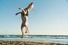 What a jump (Leo Hidalgo (@yompyz)) Tags: sony a6300 pitia dálmata dalmatian dog fun beach playa cabo pino málaga