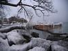 Damage. (Leszek W :)) Tags: leszekwronski tree snow sky winter lake lakeontario water ice damage panasoniclumixdmcg7 panasonicdmcg7 panasonicg7 dmcg7 lumixdmcg7 lumixg7 lumix mft m43