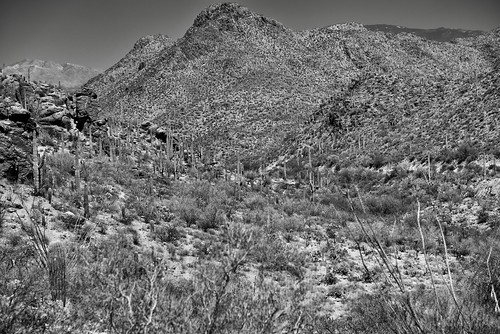 Late Afternoon Sun Over the Tucson Mountains (Black & White)