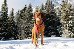 Hugo (AndreaDobos) Tags: tatry winter