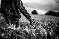 Wheatfield (PaxaMik) Tags: wheat wheatfield summertime summer field touch touching hand black blackandwhitephotos noiretblanc noir n§b main champdeblé blé été gladiator memory souvenir