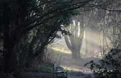 Shafts of sunlight. (pstone646) Tags: woodland path sunlight mist trees nature bench weather ashford kent shadows shade