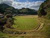 Skilled farmer. (Yasuyuki Oomagari) Tags: country countryside wheat village green nikon d810 zeiss distagont2821 line 麦畑 裏作 日本 田舎 ngc