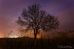 En soledad (www.jorgelazaro.es) Tags: tree night sky sunset árbol atardecer landscape nature lleida catalunya españa es