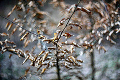 Helios, winter and branches (STE) Tags: ramo rami branch branches foglie secche dried leaves inverno winter helios bokeh