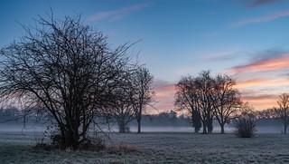 Misty Morning Glow