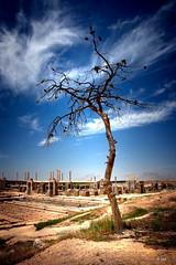 persepolis tree (freakingrabbit) Tags: sky blue clouds tree ruins iran historic persia persepolis