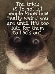 The trick is to not let people know  how really weird you are until it's  too late for them to back out. (tjetjev_gorbatjev@yahoo.co.id) Tags: motivational trick live fitnessmotivation poetry coffee quotes quotation life weird love inspirational enlightenment hustle wisdom travel cat