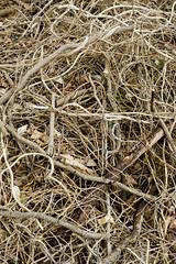 Sticks (Erika Norton-Urie) Tags: sticks woods forest nature