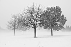 Brume/Mist (bob august) Tags: 2018 2018©rpd'aoust arbres bw blackwhite brume canada d90 février hiver mist montréal neige nikkor18135mm nikon nikond90 noiretblanc parcjarry snow trees villeray winter