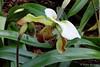 Orchideenblüte (Sockenhummel) Tags: botanischergarten botanischergartenberlin fuji orchideenblüte orchidee blüte flower blume gewächshaus greenhouse orchid frauenschuh x30