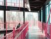 Berlin (mezitlab) Tags: berlin 2017 2017december canon canoneos600d 24mmpancake travel evs germany europe photography orsivarga rovar mezitlab geometry lines pink pigeon symmetry street streetphotography
