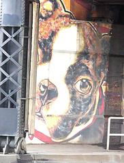 Dog graffito Spokane, WA (Teddi Beres) Tags: real life rl dog face graffito art urban spokane wa