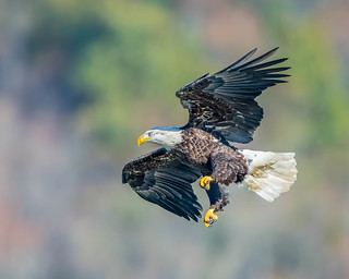 Fixated --- Life of Eagle...!