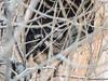 Raccoon (Wild Bird Company) Tags: raccoon procyonlotor raccooncolorado raccoonboulder wildbirdboulder wildbirdcolorado wildbirdcompany formerwildbirdcenter notwildbirdsunlimited birdseed birdwalk saturdaymorningbirders bouldercreekat75thst heatherwoodtrail bouldercountyopenspace gunbarrel colorado eileenrutherford