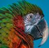 _MG_4339 (Juan Pablo J.) Tags: portrait bird canon70200mmf4 canon5dmkii color