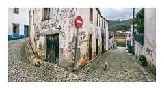 Dornes, Ferreira do Zêzere, Portugal (Sr. Cordeiro) Tags: dornes ferreiradozêzere portugal rua street esquina corner panorâmica panoramic stitch stitching wide cão dog fuji fujifilm xpro2 fujinon xf 1855mm f284 ois