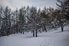 Boschi del Truc (AleAinaz) Tags: incendio valle di susa torino boschi rocciamelone montagna alberi