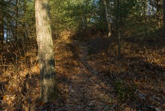 (Schuyler H. Miller) Tags: kingsgap forest landscape nature trail trees winter
