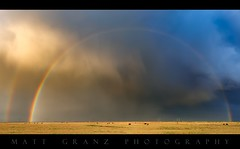 Rainbow at the end of the Storm (Matt Granz Photography) Tags: storm clouds stormy cloudy rainbow doublerainbow california delta cows mattgranzphotography nikond750 nikon2470mm pano panorama panoramic