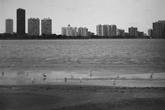 (stephen.rollick) Tags: 35mm film filmsnotdead filmphotography kodak waterfowl birds birdwatching bw blackandwhite chicago montrose harbor illinois shore northcoast lake lakemichigan