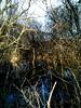 Img_4898 (steven.heywood) Tags: leightonmoss winter