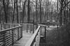 Lombkorona sétány. Erdei futópálya - Karcag (e-lias hun) Tags: brigde nature walkway forest lombkoronasétány karcag woods blackandwhite 35mm winter