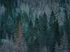 Be Yourself (mikeSF_) Tags: select california park pentax elcapitan halfdome wwwmikeoriacom yosemite snow winter yosemitenationalpark 35mm yosemitevalley mercedriver mikeoriaphotography 645z photography