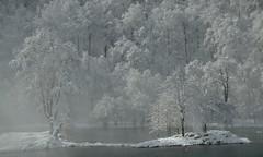 Lac de Bethmale (Michel Seguret Thanks for 11,6 M views !!!) Tags: france pyrenees ariege montagne montana montagna berg moutain hiver invierno inverno winter michelseguret d800 pro arbre tree arbol baum schnee snow neige nieve saison season