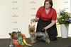 BIR Silky Terrier GRP 3: BG CH Anrina Klim Knukle Down To Love (Svenska Mässan) Tags: best race mydog hundmässa bir