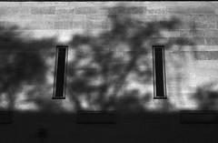 Seeing in the dark (RoryO'Bryen) Tags: roryobryen rangefinder kodaktrix selfdeveloped standdeveloped winter inverno invierno blackandwhite noiretblanc 50mm analoguephotography iso400 cambridgeuk copyrightroryobryen
