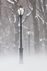 Lighting the way (marktmcn) Tags: snowy treelined way snowswept lights streetlamps trees lit street lamps snow storm snowstorm blizzard central park new york dsc rx100
