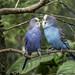 Love+Birds