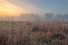 _D851604 (noelfleming) Tags: noel fleming photography colorado co sunrise fog rocky mountain arsenal park wildlife trees landscape inspirational grass frost rockymountainarsenal tree nature countryside cold forest outdoor winter mist beautiful season white morning