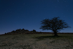 Hound Tor 1 (Anna_Walls) Tags: dartmoor devon houndtor lonetrees moonlight night places timesofday trees