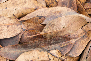 Camouflaged Mantis
