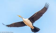 _DS57227.jpg (WaterDragon3) Tags: longreef birds
