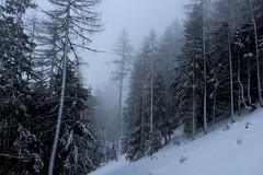 Champex-Lac (bulbocode909) Tags: valais suisse champexlac forêts arbres nature montagnes hiver neige brouillard stratus givre